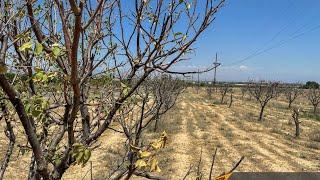Губительная засуха в Армении. Огромные убытки и тяжелые последствия