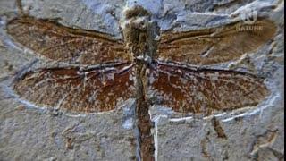 Мир Стрекоз-Sky Hunters-The World of the Dragonfly(Viasat Nature)