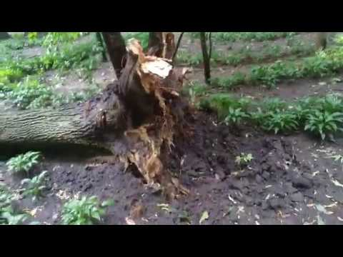 The Aftermath Of A Hurricane In Gomel, Belarus (01.07.2019) - 2 Part