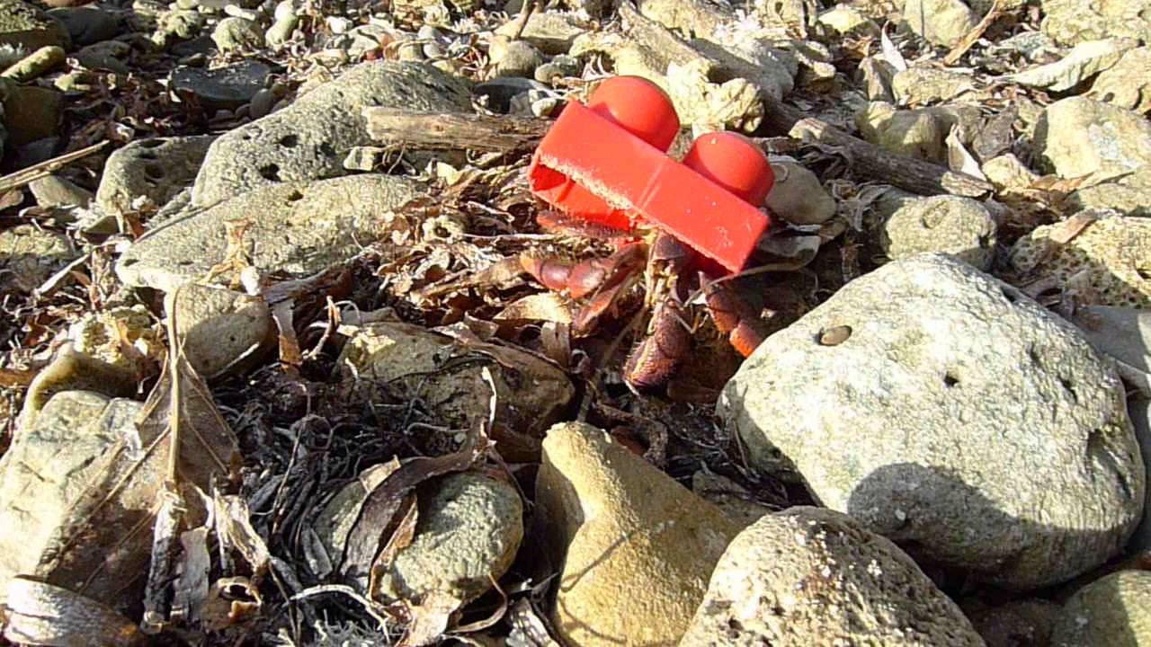 how to make your hermit crab changing shells
