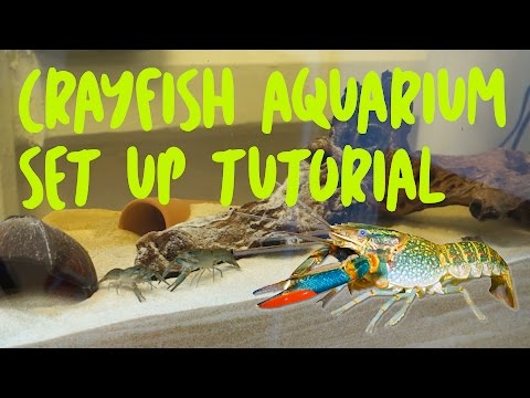 Crayfish Aquarium Set Up Tutorial