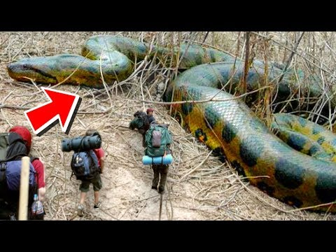 HUGE SNAKES AND ALLIGATORS MEET THE BOY SCOUTS!! | BRIAN BARCZYK