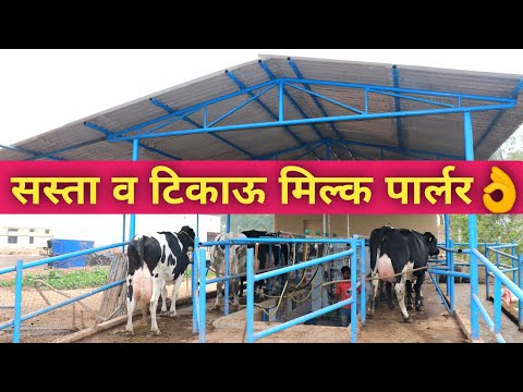 How To Make Low Cost Milking Parlour Machine For Dairy Cattle In India|Price+How Works