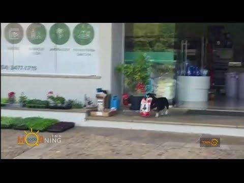 ย้อนหลัง สุนัขแสนรู้ เดินไปซื้ออาหารเองทุกวัน
