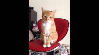 A cat watching TV.