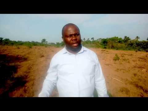 Cassava: The 21st Century Business Opportunity