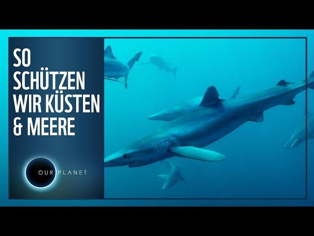 So schützen wir unsere Küsten & Meere   WWF Unser Planet