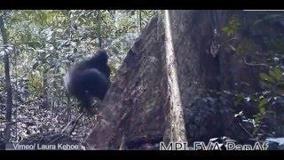 ŞOK GÖRÜNTÜLER- -Maymunlar ve Şempanzeler ibadet ediyor