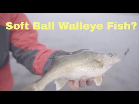 Soft Ball Walleye Fish? | Walleye Fishing 2019 | Fishing Tips And Techniques 2019