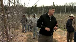 The New Tall Spindle Apple Orchard System: Goldrush Prunning