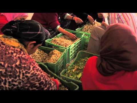The Neroli Harvest - Morocco