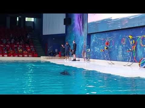 Part 5   Dubai Dolphinarium – Dolphin and Seal Show