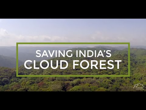 WeForest : Saving India's Cloud Forest