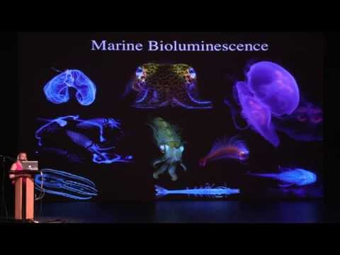 BCSouth Science Seminar Series with Dr. Heather Bracken-Grissom