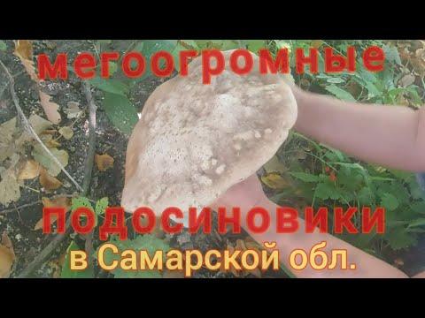 Вопрос: Где растут грузди (белые и черные) в Самарской области Какие места?
