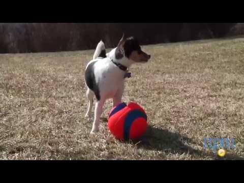 Chuckit! Large Kick Fetch Ball from Petmate