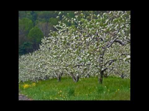 Spring in Franklin County.wmv