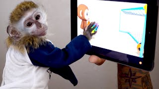 Baby monkey learns how to use iPad!