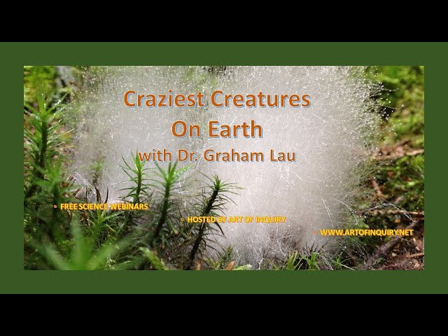 Craziest Creatures on Earth with Dr. Graham Lau