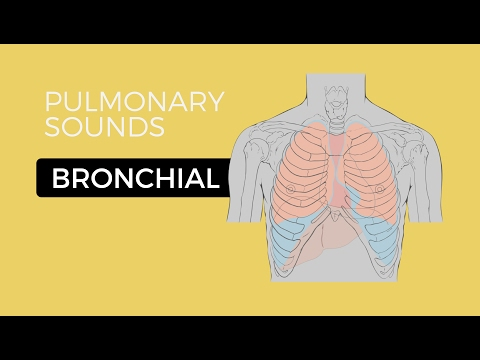 02 _ Lung Sounds - Bronchial breath sounds