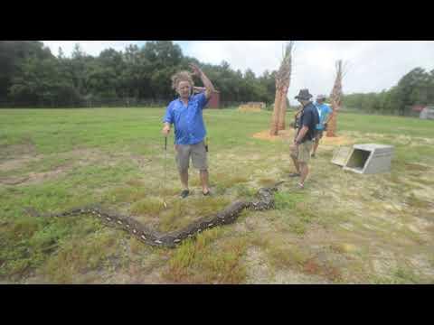 Denise Plante - World Record Snake