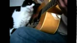 Гладит кота и играет на гитаре одновременно