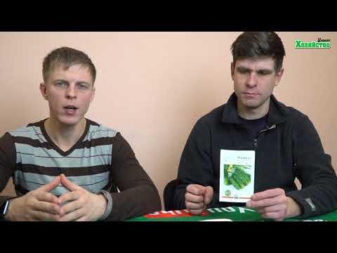 5 самых урожайных сортов огурцов