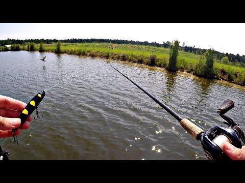 Fishing Topwater Snake Lures!