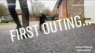VlogEp2(First lead training basic retrieve outside working Cocker Springer Spaniel gundog training