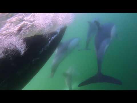 Golfiños gravados dende o mar
