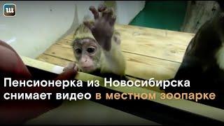 Самый добрый видеоблогер снимает белых медведей и капибар