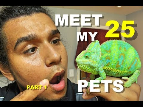 Meet My Pets (20+ Reptiles in One Room) 🐍🐍🐍 Part 1