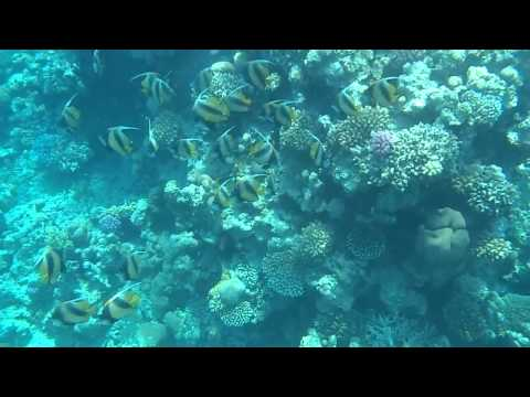 Swimming into a shoal of Pennant coralfish