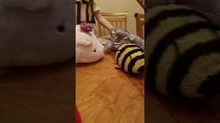 FUNNY STUFFED ANIMAL VIDEO 2