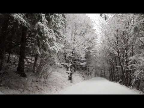 Relaxing Snowfall 1 Hour - Sound of Winter Wind in Forest