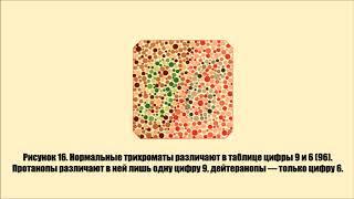 Вы видите все цвета? Пройти тест на дальтонизм!