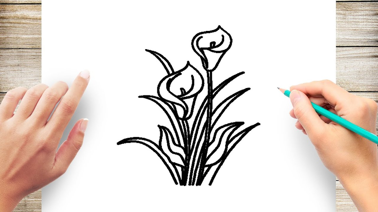 How To Draw Calla Lily Easy Youtube