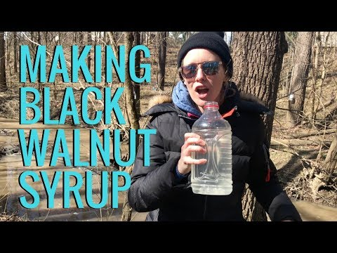 How to Make Syrup | Black Walnut Syrup Tastes Better Than Maple Syrup