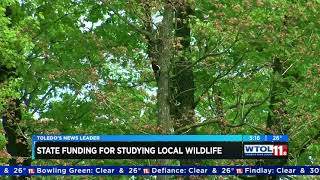 UT scientists awarded $400,000 grant to study wildlife in Oak Openings region