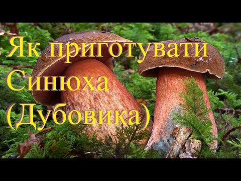 Как готовить гриб дубовик