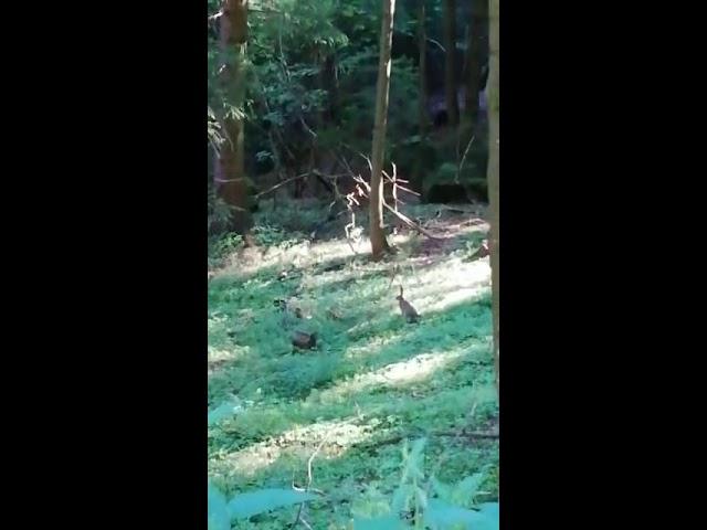Hasen 🐰 im Wald
