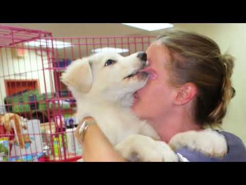 A Year of Love at the Humane Society of Greater Miami - 2017