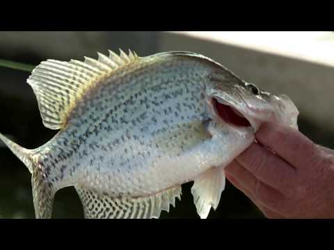 Heavy Metal Crappie Fishing on Grand Lake St. Marys