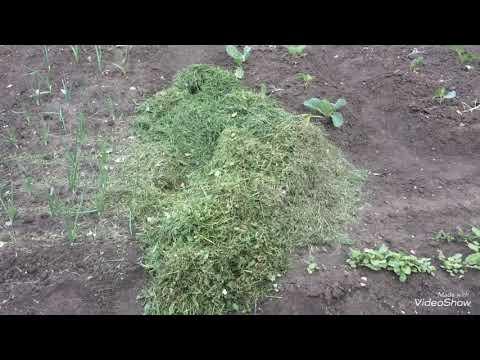 Несколько способов использования свежескошенной травы.