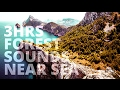3 Hrs Forest Sounds Near Sea