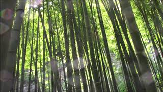 報国寺 鎌倉