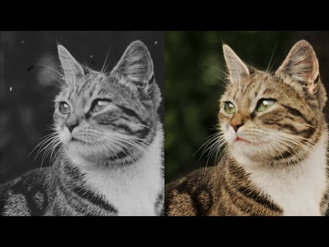 Colorization Of A 120-Year-Old Cat Photo
