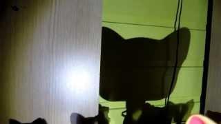 Ужосы стоячих кошек 1