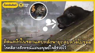 ติดแหง็กในซอกแคบหลังพายุถล่มหวิดไม่รอด โชคดีลางสังหรณ์แม่นมนุษย์ใจดีช่วยไว้   Dog's Clip