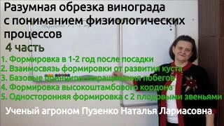 """4 фильм """"Разумная обрезка винограда с пониманием физиологических процессов"""""""
